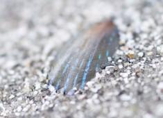 Snäcka i sand